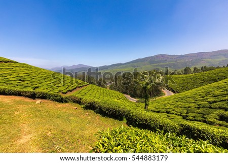 Terraced Tea Plantations in Munnar, Kerala, India