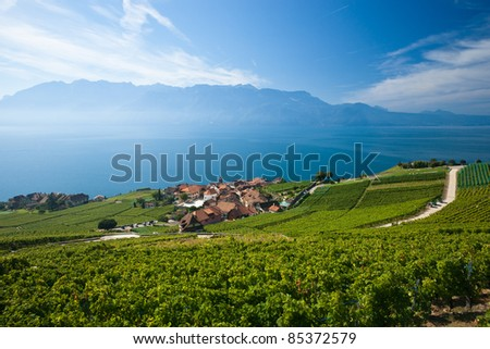 Terraced vineyards of Lavaux at Lake Geneva