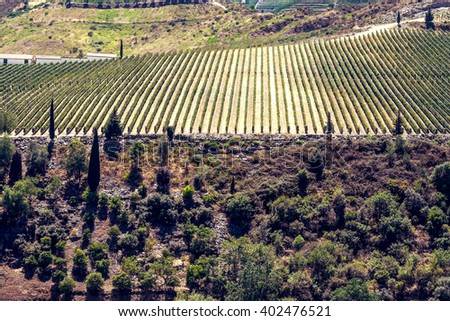 Terraced vineyards, viticulture and heritage, beautiful landscapes - stock photo