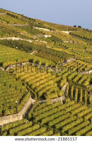 Terracing in Vineyard