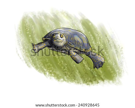terrapin diving