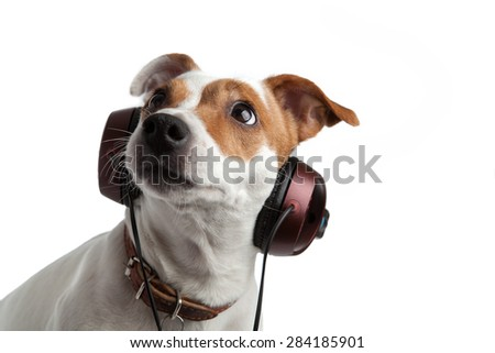 terrier listening to music on headphones - stock photo