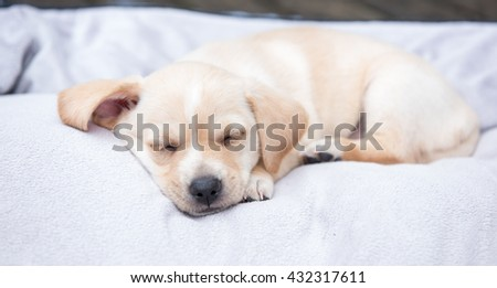Terrier Mix Puppy Sleeping on Dog Bed Outside - stock photo