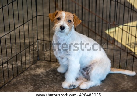 terrier puppy dog looking up from cage