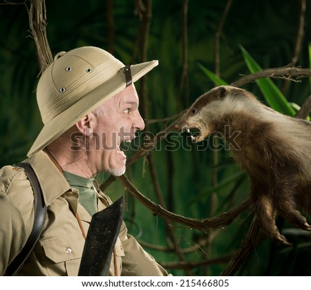 Terrified explorer meeting a ferocious badger face to face in the forest. - stock photo