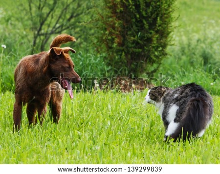 Territory defence. Cat and dog conflict. - stock photo