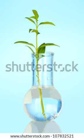 Test-tube with a transparent solution and the plant on blue background close-up