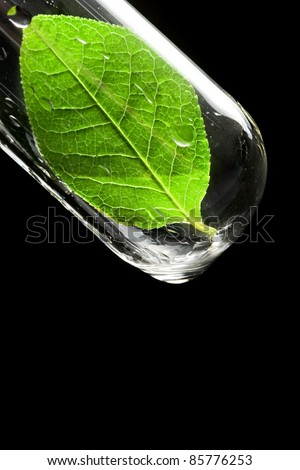 Test tube with leaf - stock photo