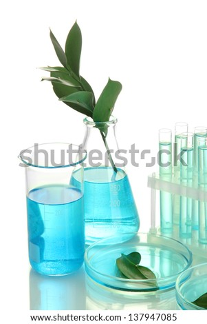 test-tubes and leaves tested in petri dishes  isolated on white - stock photo