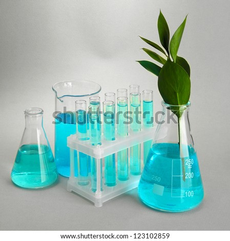 test-tubes and leaves tested in petri dishes on grey background - stock photo