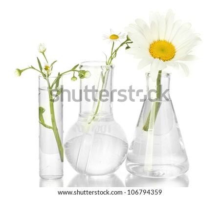 Test-tubes with a transparent solution and the plant isolated on white background close-up - stock photo