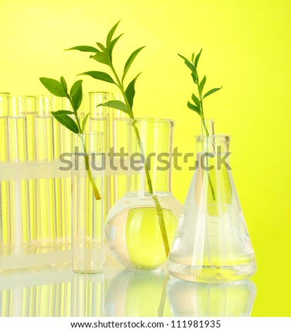 Test-tubes with a transparent solution and the plant on yellow background close-up