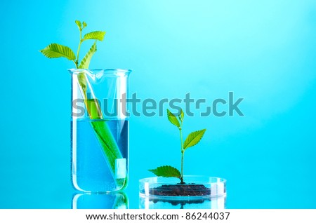 test tubes with plants on blue background
