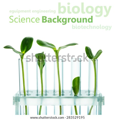 Test Tubes with small plants Isolated on white. Genetically Modified Organisms - stock photo