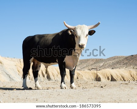Texas longhorn bull breed with sawed with his horns against the sky - stock photo