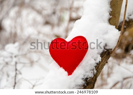 textile red heart on snowy tree branch in winter - stock photo