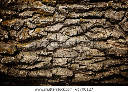 Texture - a bark of an old oak - stock photo