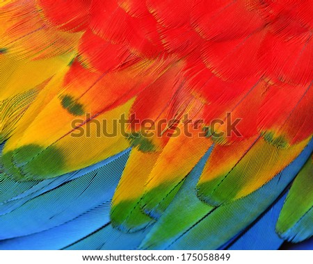 Texture and close up details of Scarlet Macaw Feathers - stock photo