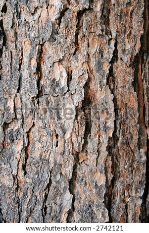texture and detail of pine tree bark - stock photo