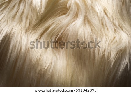 Texture, background. Fur yak white coat female. the feel, appearance, or consistency of a surface or a substance.