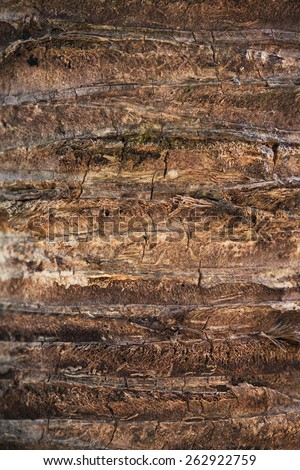 Texture background of coco palm - stock photo