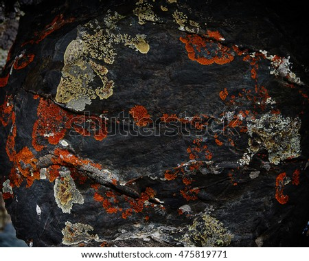 Texture background of natural patterns and shapes of lichen on old stone