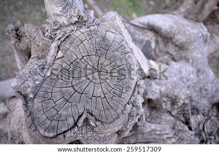 Texture background of old stump section - stock photo