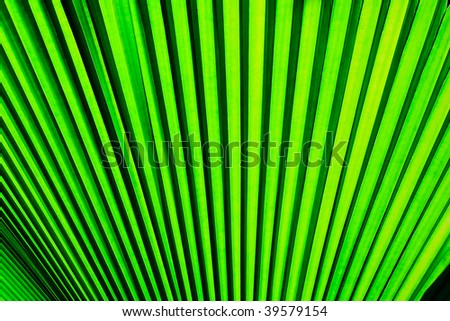 Texture background of palm leaf - stock photo