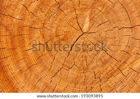 Texture background of rings of a tree log - stock photo