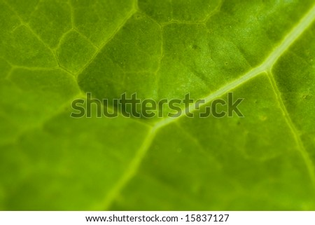 Texture detail of a green leaf. Perfect desktop