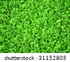 Texture - fresh green leaves of clover - stock photo