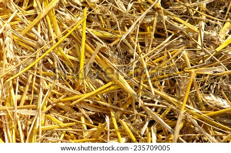 Texture hay closeup in color - stock photo