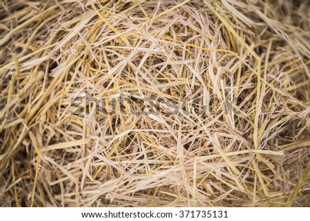Texture hay closeup in gold color. Fodder for livestock and construction material. - stock photo