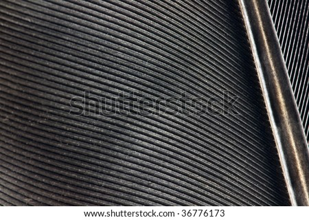 Texture of a black feather crow - stock photo