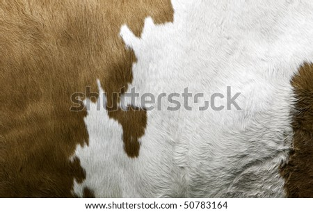 Texture of a Cow Coat
