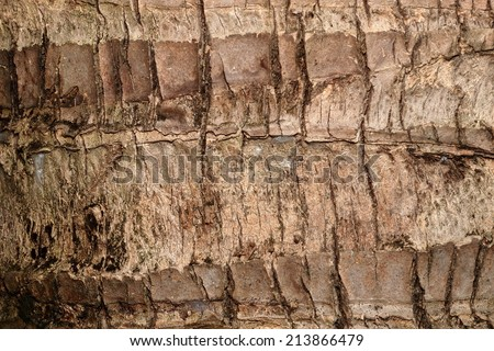 texture of a dark brown coconut tree under natural sunlight  - stock photo