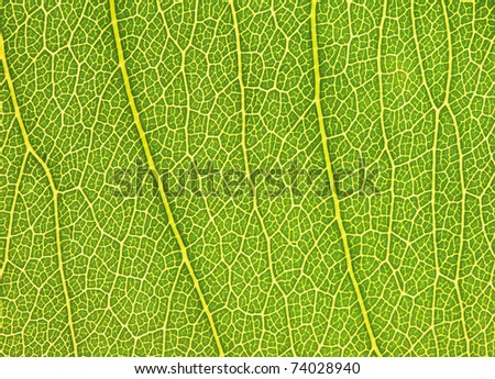 Texture of a green leaf - stock photo