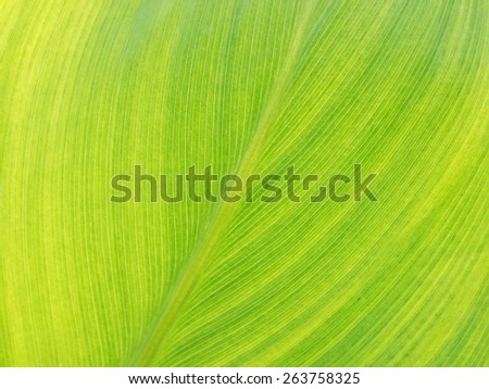 Texture of a green leaf as background, unfocused - stock photo