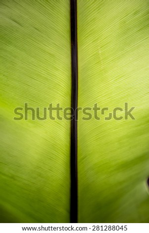 Texture of a green leaf as background with line on the center - stock photo