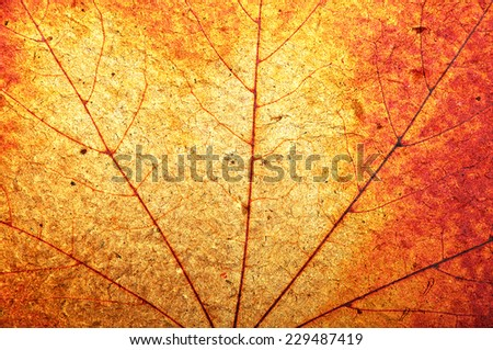 Texture of a grungy colorful autumnal maple leaf