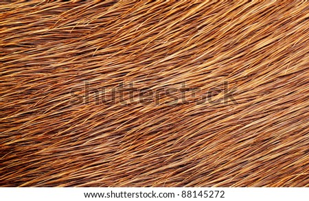 Texture of a hairy cow skin surface - stock photo