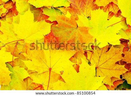 Texture of a maple leaf as background