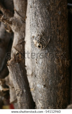 Texture of a tree bark - stock photo