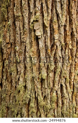 Texture of a trunk cortex, close up. - stock photo