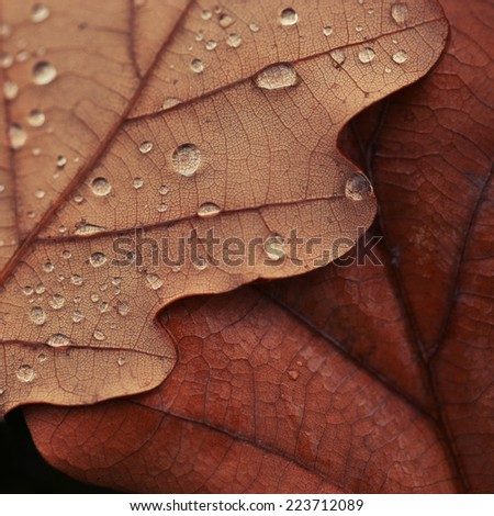 texture of autumn leaves with drops of water nature background - stock photo