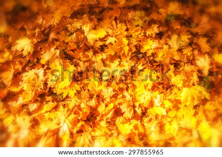 Texture of autumn maple leaves. Photographed in the autumn park - stock photo