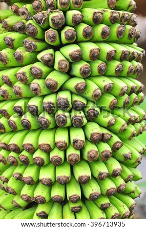Texture of banana flower in a coutryside in Vietnam - stock photo