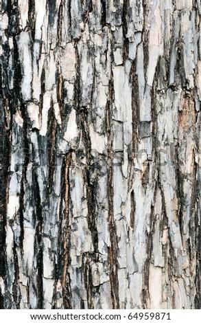 Texture of bark - stock photo