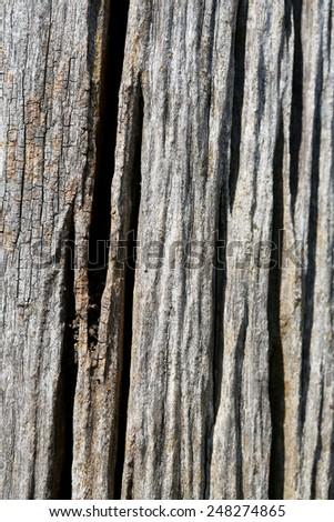 texture of bark wood - stock photo