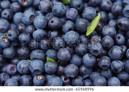 texture of blueberries - stock photo